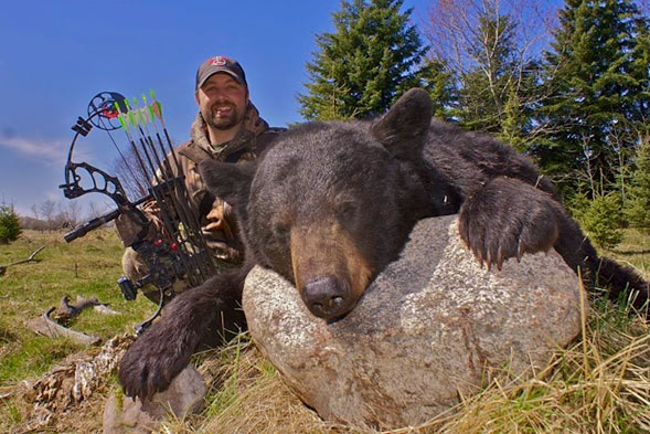 A big bear killed with Buck Country Outfitters in Saskatchewan